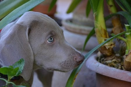 How to Protect Your Houseplants from Pets