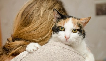 Is Your Cat Endangering Your Health? Debunking Myths