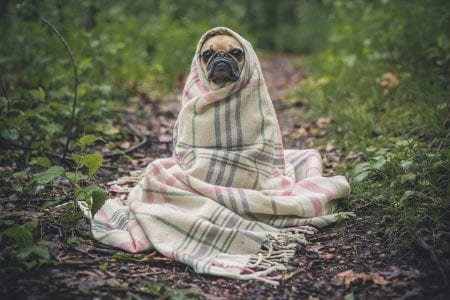 Dog Health: Signs of a Healthy Dog